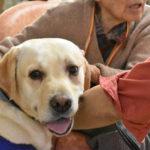 人の心を救うアニマルセラピー 北海道ボランティアドッグの会の活動をリポート