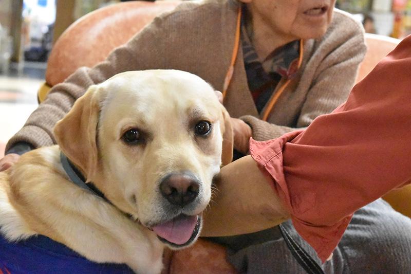 セラピー犬①