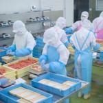 微生物検査が60分でできるようになる食品衛生検査セット