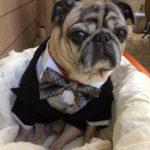 淑徳大学名誉教授・亀山幸吉氏が株式会社CARE PETSの最高顧問に就任。保護犬・猫と暮らす障害者グループホームや、愛犬と通える高齢者デイサービスなどの展開を指導。